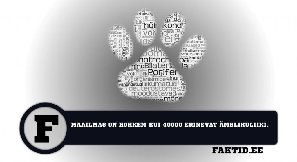 MAAILMAS ON ROHKEM KUI 40000 ERINEVAT ÄMBLIKULIIKI. loomad 44 1024x558