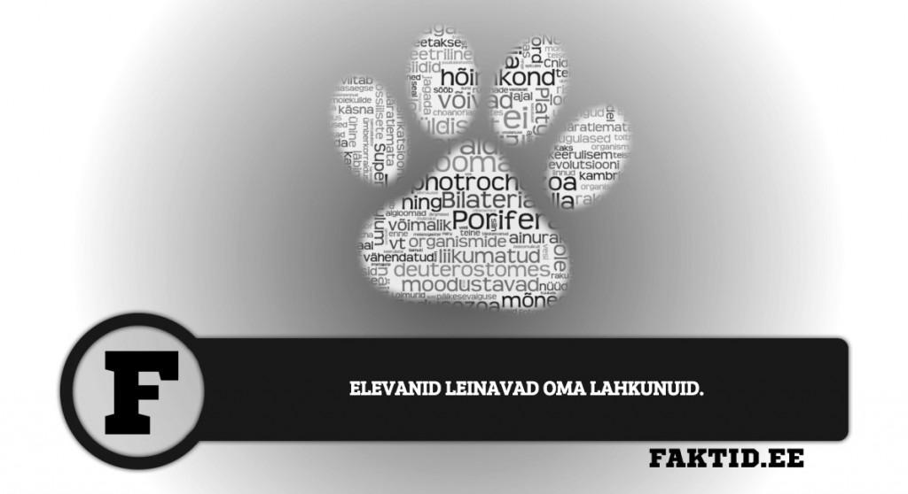ELEVANID LEINAVAD OMA LAHKUNUID loomad 111 1024x558