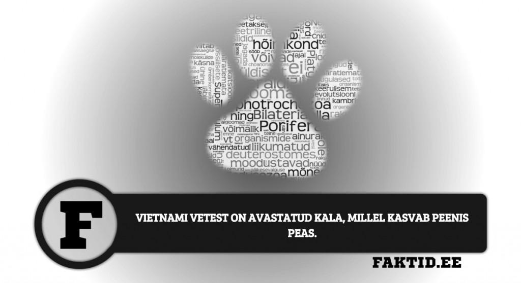 VIETNAMI VETEST ON AVASTATUD KALA, MILLEL KASVAB PEENIS PEAS loomad 91 1024x558